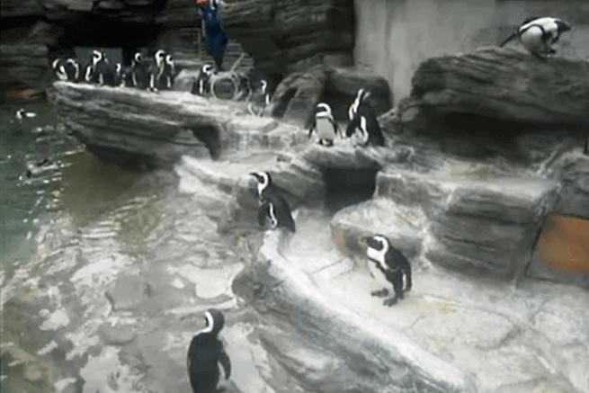 3水族館ライブカメラ