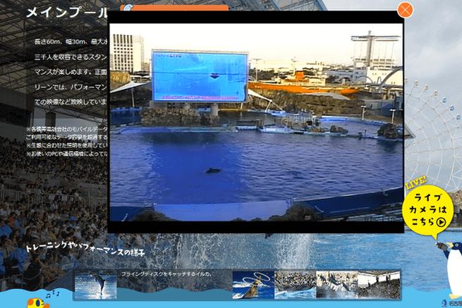 6水族館ライブカメラ