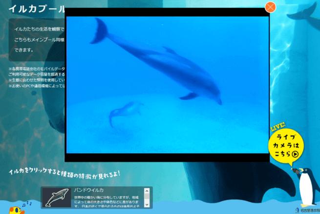8水族館ライブカメラ
