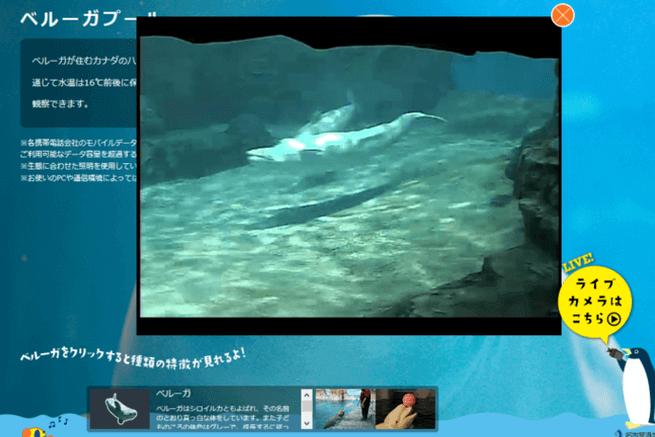 9水族館ライブカメラ